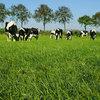 Landwirtschaftskammer: Rohrschwingel gut verdaulich