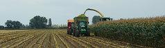 Zaaien vanggewas voor oogst van mais effectiever