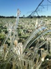 Heritage Seeds Australian Update July 2018