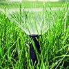 Pokonaj suszę na trawniku