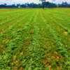 Barenbrug International Alfalfa Production Update December 2017