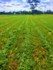 Heritage Seeds International Alfalfa Production Update December 2017
