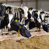 Verbeter de gezondheid van je melkvee met Bonsilage Fit gras