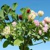 Planujesz wiosenne podsiewy użytków zielonych i lucerników?