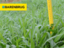 Barenbrug adquire o negócio de Brachiaria da Corteva Agriscience, Divisão Agrícola da DowDuPont