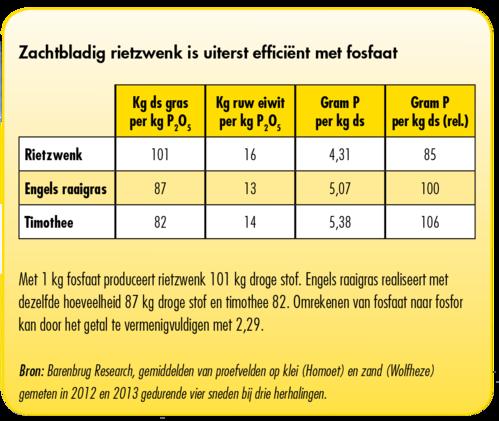 fosfaat efficientie  zachtbladig rietzwenk