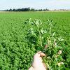 3 x TAK! Plon + Białko bez GMO + Dopłaty