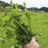 Kruidenrijk grasland heeft meer voordelen dan alleen biodiversiteit