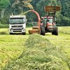 Managing ryegrass pastures to maximise the spring flush