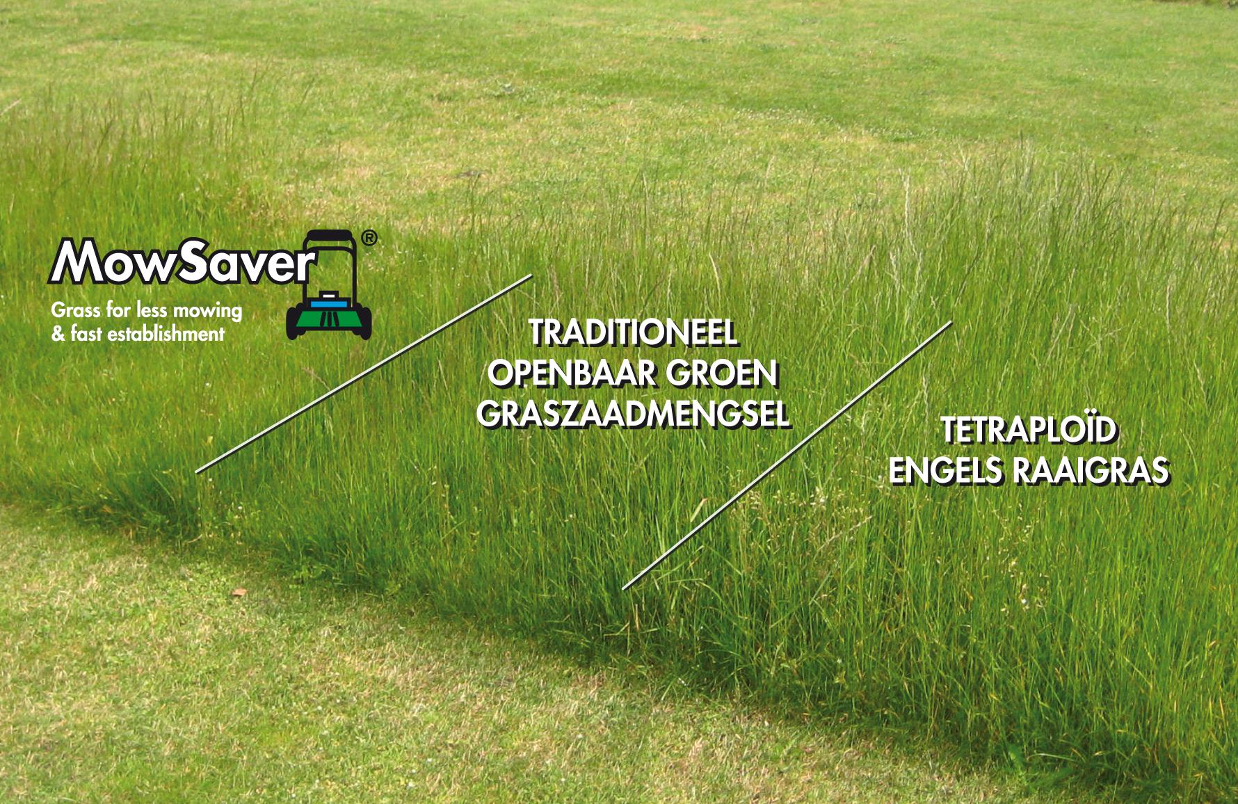 Laag-blijvend gras presteert beter dan traditionele openbaar groen grassen en tetraploids raaigrassen.