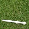 Finbladet græs tillader tæt klipning