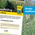 Grasgroenbemester voor vanggewas in mais