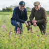 British farmers growing grass for seed