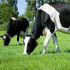 Focus on grass quality decreases feed costs at dairy farms