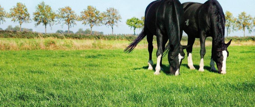 Horsemaster_header_2021_06!