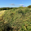 The biggest threat to grassland productivity is complacency