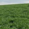 Estratégias de manejo de pastagem para o período de transição águas-seca