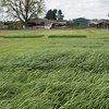 Barenbrug UK to release NEW AFBI ryegrass varieties for UK agriculture