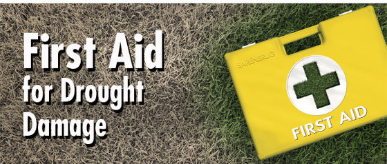 Image_Email_Turf_First-Aid-ENG