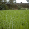 How to Recover Your Lawn Following the 2018 Drought