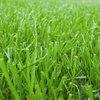 Piękny trawnik - pytania i odpowiedzi