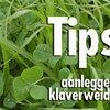 Tips voor succesvolle grasklaverweide