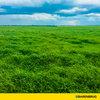 Fazenda Dois Mil elogia perfilhamento e rebrota de novo cultivar de Brachiaria