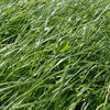Wiosenny przegląd łąk