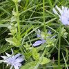 Onderzoek brengt duidelijkheid over botanische samenstelling kruidenrijk grasland onder maaien en beweiden