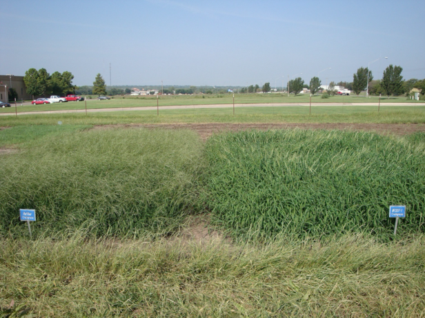 Impact Forage Crabgrass Seed Test Plots in Ardmore, OK
