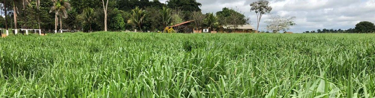 ILP Barenbrug: Casari Agropecuária