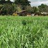 Casari Agropecuária - ILP