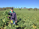 Forage crops deliver positive returns for Sunny Point