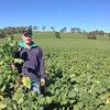 Forage crops deliver positive returns for Sunny Point