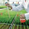 Bæredygtig græsdyrkning gennem forskning