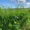 Return on Investment with Reseeding