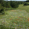 Willingdon Golf Club Wildflowers | October 2017