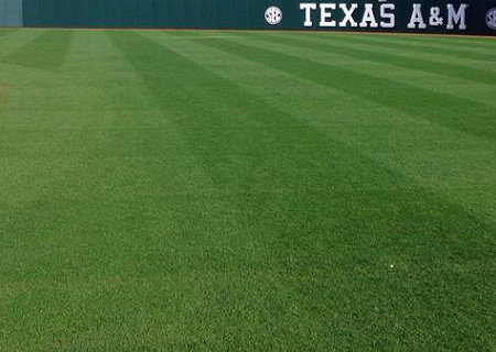 3 way Perennial Blend at Texas A&M Field