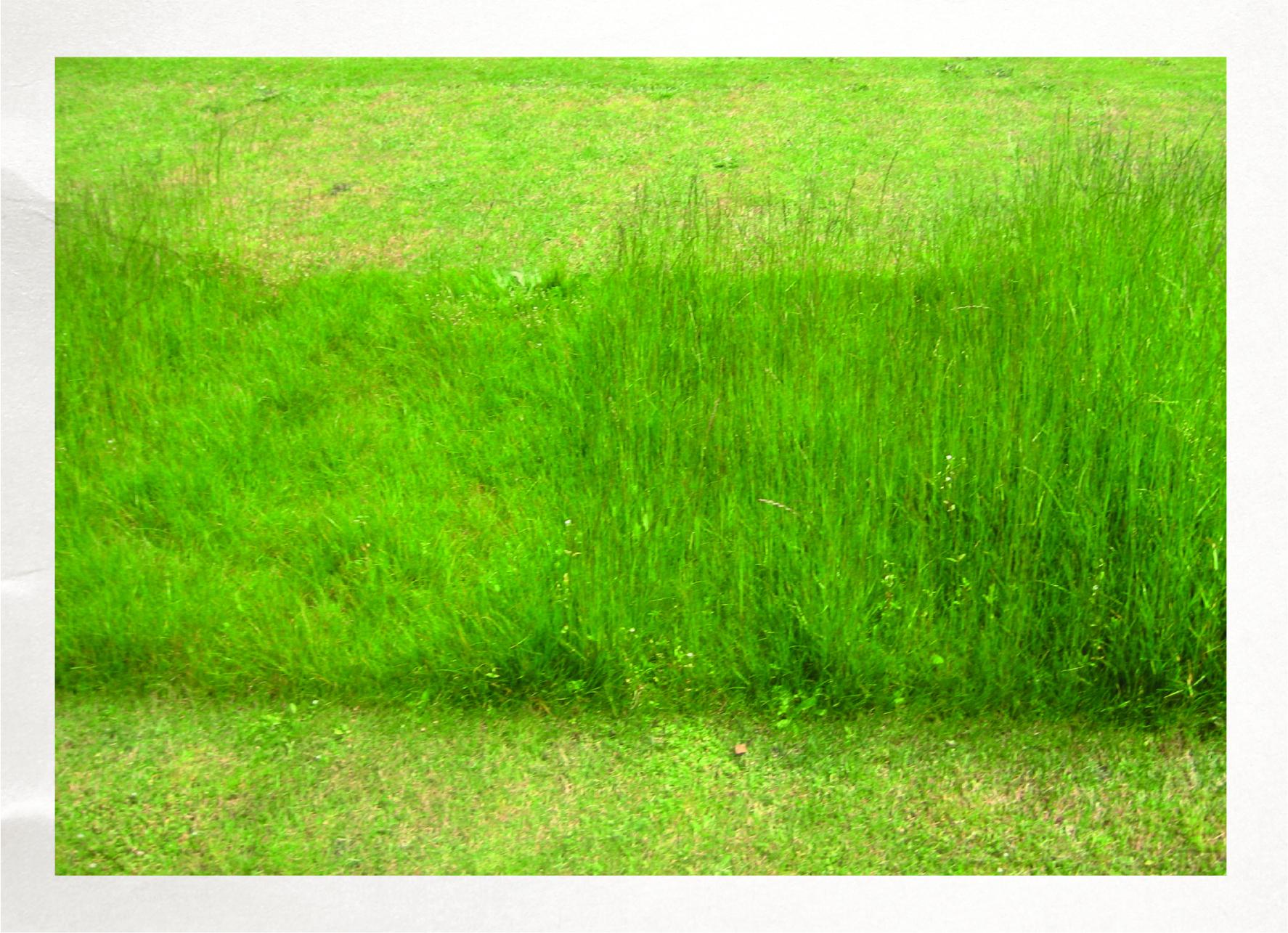 525G Green Velvet Mow Saver Lawn Seed Carton