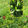 Grass & herbal leys