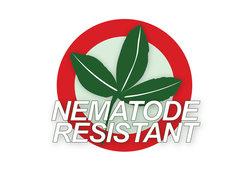 Nematoden resistant