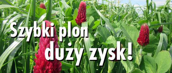 Newsletter_9Szybki Plon