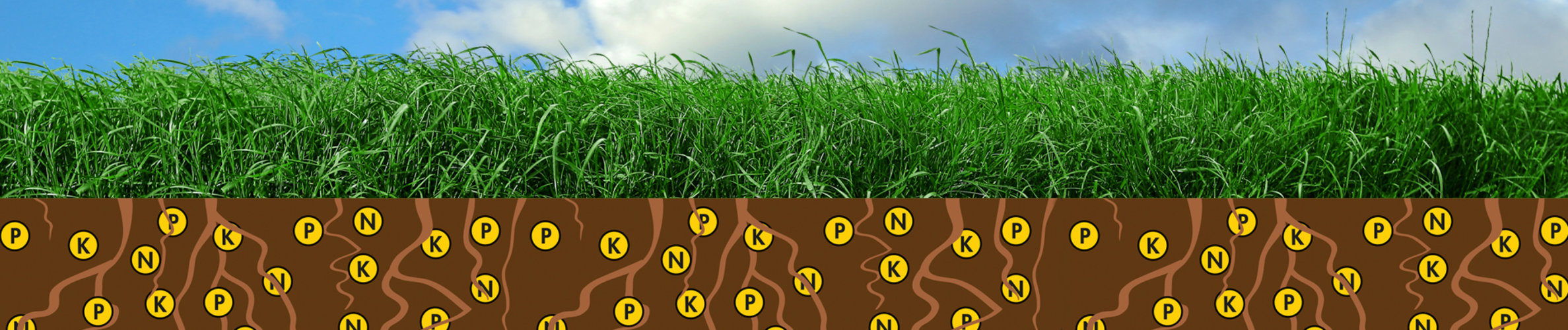 NutriFibre_breng fosfaat boven de grond_2!