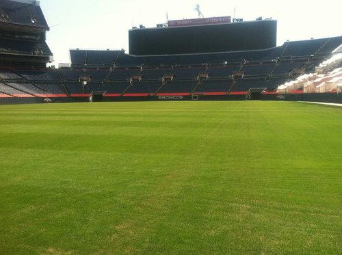 RPR Regenerating Perennial Ryegrass at the Denver Bronco's Stadium in Colorado