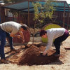 Staff plant indigenous trees - South Africa