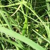 Jornada de Sucesso: produtor baiano melhora formação de feno e aumenta produtividade com o Cynodon dactylon