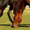 Heb jij een gezonde paardenweide?