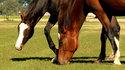 Hebt u een gezonde paardenweide?