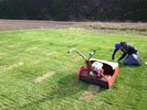 Ryegrass virus research re-visited