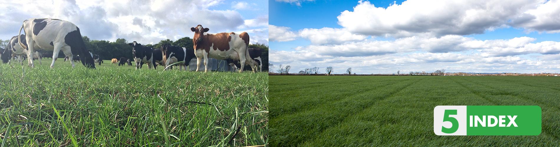 farming advice good grass guide index 5Index_5 #19